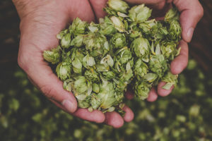 A Journey from Hops to Beer: The Grief Path